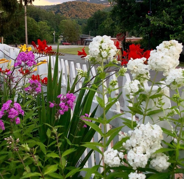 Gallery Image picket-flowers-5.jpg