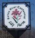 Betsie River Centennial Lily Farm