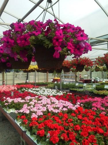 Gallery Image siebenthalers%20flowers.jpg