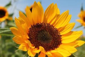 Deb's Flowers