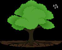 Beechwood Tree Service & Consultancy