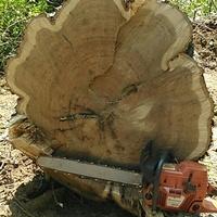 Allen's Logging LLC