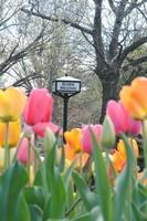 Gallery Image tulips.jpg