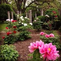 Linwood Gardens
