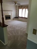 Spectacular Carpet Cleaning and More