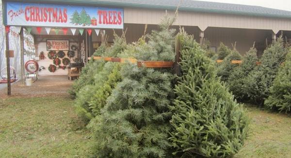 Grzenda Christmas Tree Farm
