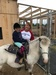 Dinky Doo Petting Zoo & Pony Rides Too LLC