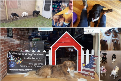 K's Canine Training Services - Dansville NY