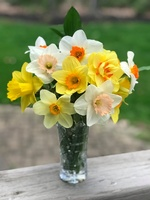 Dogwood Floral Company