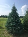 All Western Evergreen Nursery & Christmas Tree Farm
