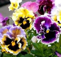 Steuben Landscaping & Floral Center