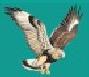 Hawk Drilling Company Inc