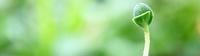 Gallery Image plant.jpg