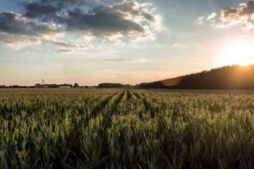 Gallery Image HISTORY-cornfield-2x-600x400.jpg