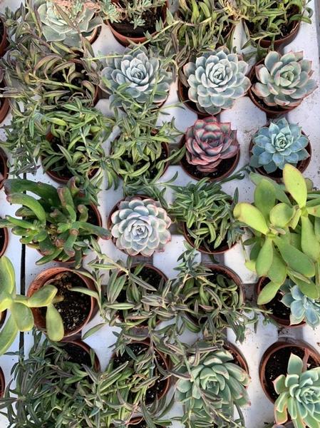 Gallery Image plants.jpg