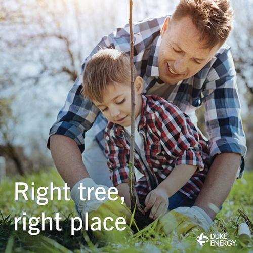 Duke Energy Planting Trees