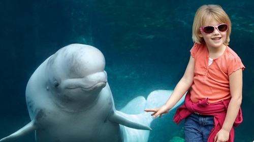 Gallery Image beluga_and_child.jpg