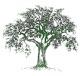 New Salem Preserves & Orchards