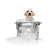 Gallery Image Dog-bath.jpg