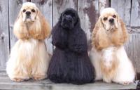 Gallery Image Three-dogs.jpg