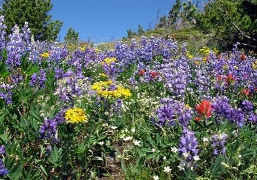 Gallery Image flowers-meadow-landscape.jpg