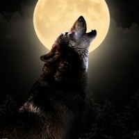 Gallery Image wolf%20in%20moon.jpg