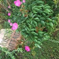 flowers in yard