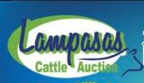 Lampasas Cattle Auction