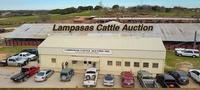 Lampasas Cattle Auction