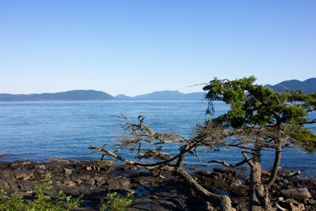 Washington Park and lone Cypress