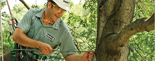Gallery Image tree-safety_958x382.jpg