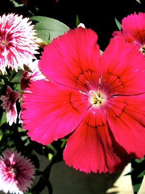 Gallery Image Kleins3.jpg