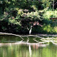 Gallery Image pond.jpg