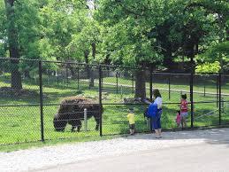 Gallery Image bison.jpg