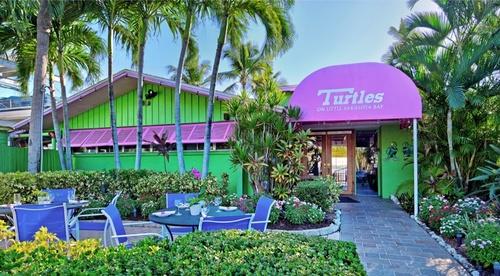 Gallery Image turtles.jpg