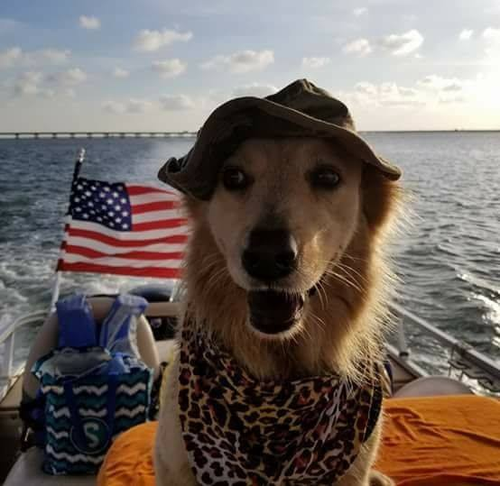 We love having pets join us on our charters!