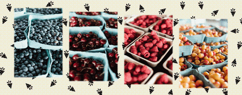 Gallery Image cloverdale%20fruit%202.png