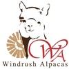 Windrush Alpacas