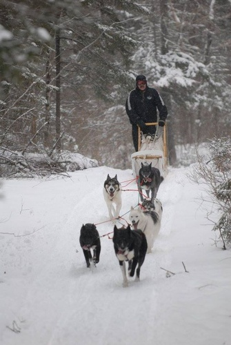 Trail mushing