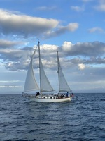 Cape Sailing Charters