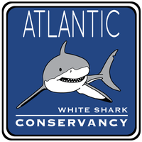 Atlantic White Shark Conservancy