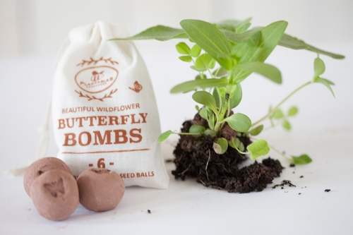 Seed bombs for our pollinator friends