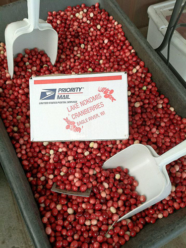 During Harvest, Cranberries Sold by the Pound