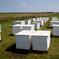 Bee hives ready to pollenate.