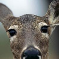 Gallery Image Deer.jpg