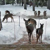 Gallery Image LLR-Unit07_Deer.jpg