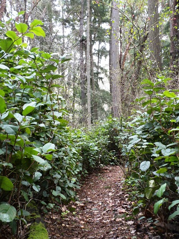 Beautiful trails and grounds at Madrona Meadows