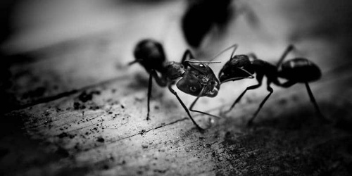 We stop ants before they come marching in your home