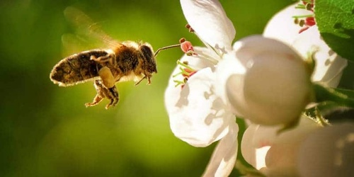 Bee removal without harming the bees as they are essential