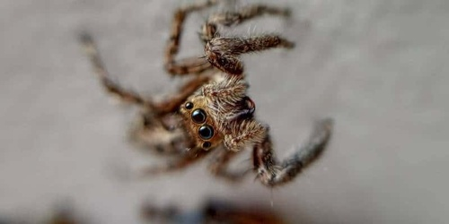 Year-round protection from spiders entering your home